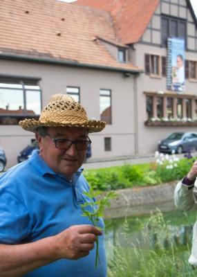 Pendant la balade, Jean Albrecht vous dit tout sur les plantes qui se mangent…ou pas