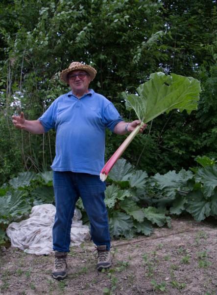Dans le Jardin de Jean Albrecht…comme une rhubarbe géante